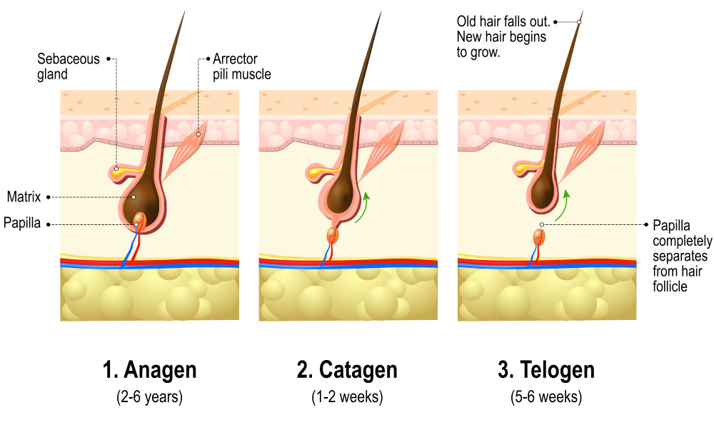 Causes Of Hair Loss West Houston Dermatology